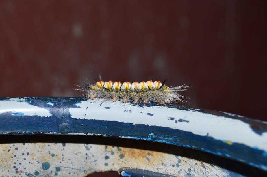 caterpillar-low