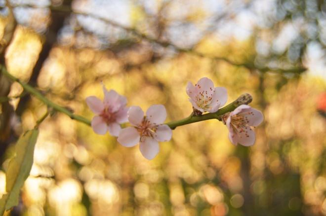 blossom-low