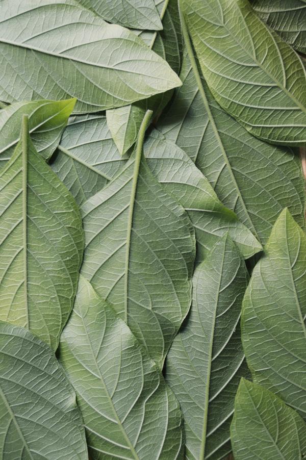 leaves background-low.jpg